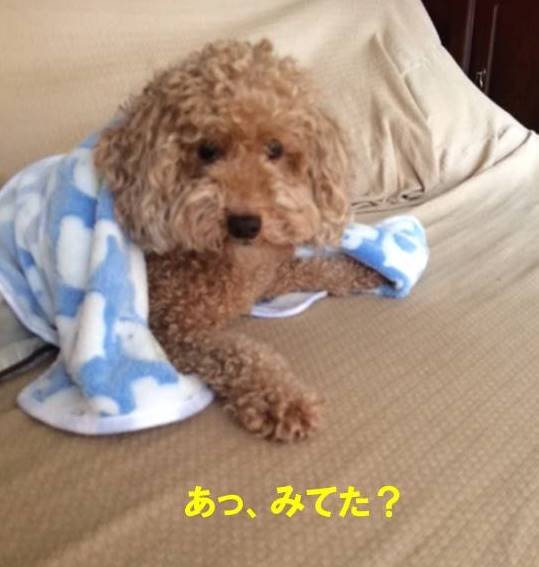 f:id:nanachan59:20170821220329j:plain