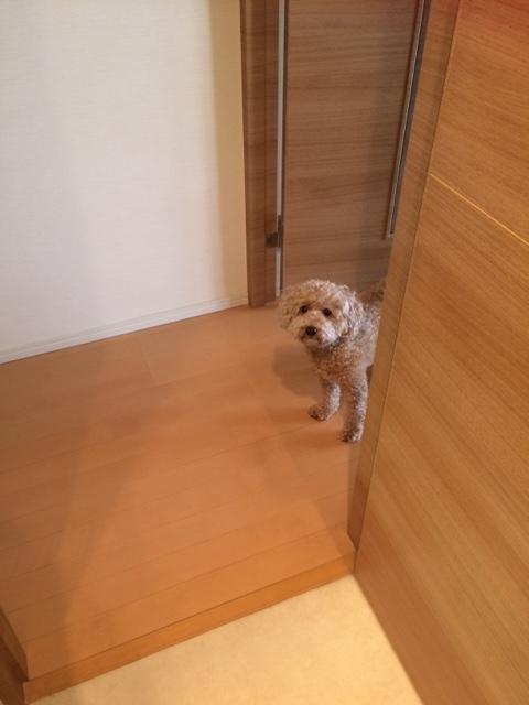 f:id:nanachan59:20170826124013j:plain
