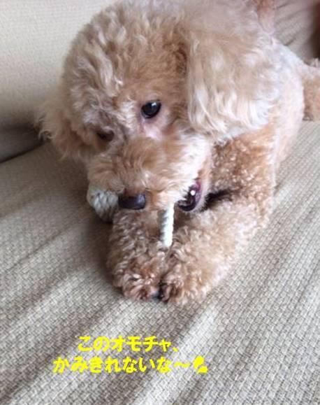 f:id:nanachan59:20170902145231j:plain
