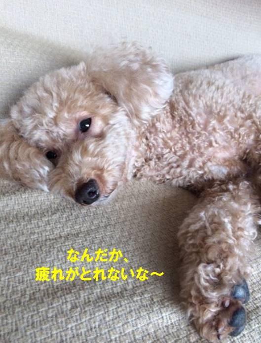 f:id:nanachan59:20170902145702j:plain