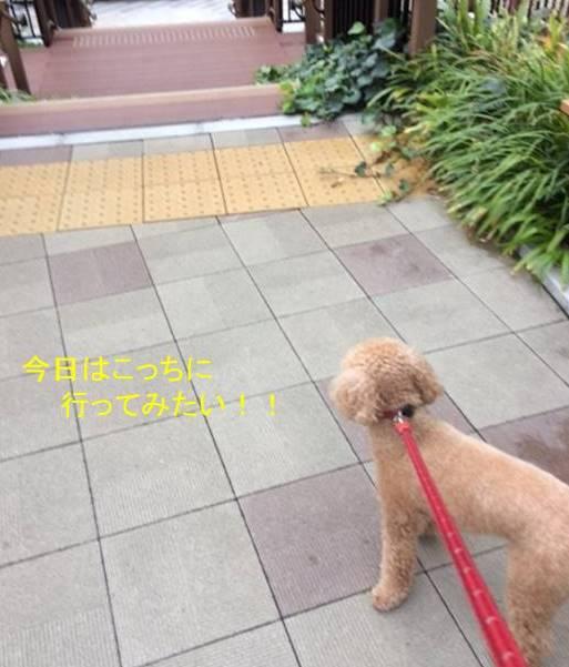f:id:nanachan59:20170904183223j:plain
