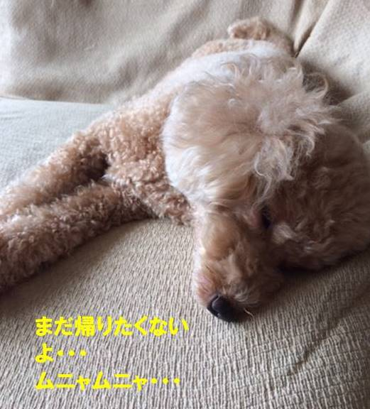 f:id:nanachan59:20170904202508j:plain