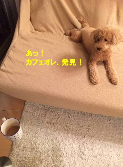 f:id:nanachan59:20170906004237j:plain