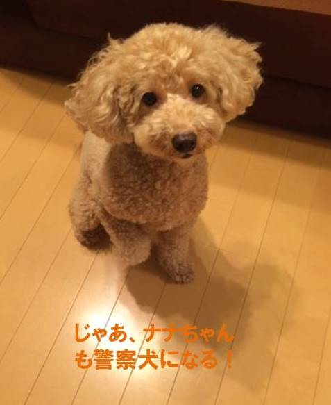 f:id:nanachan59:20170906213609j:plain