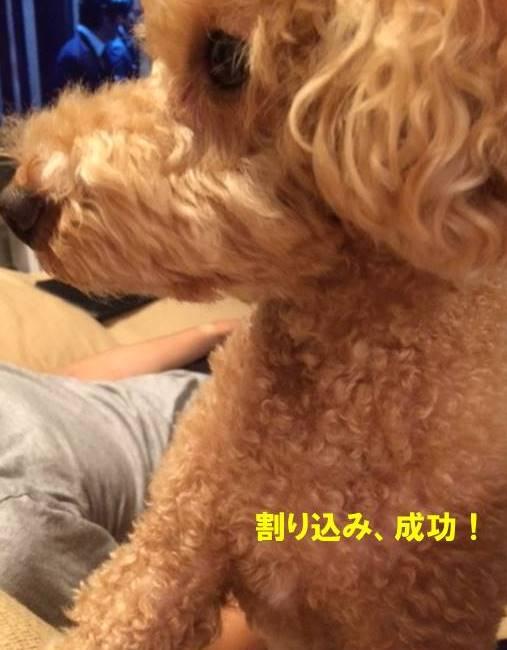 f:id:nanachan59:20170907235232j:plain