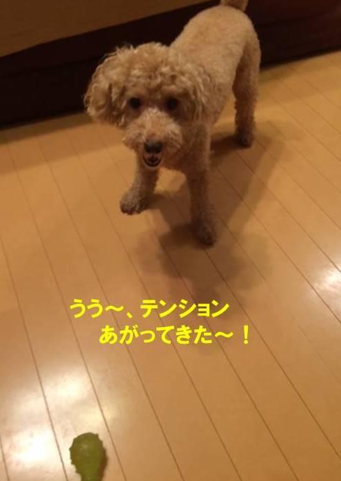 f:id:nanachan59:20170910021532j:plain