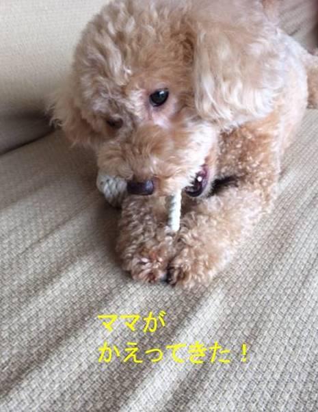 f:id:nanachan59:20170912221532j:plain