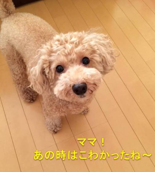 f:id:nanachan59:20170913203842j:plain