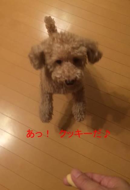 f:id:nanachan59:20170915211505j:plain