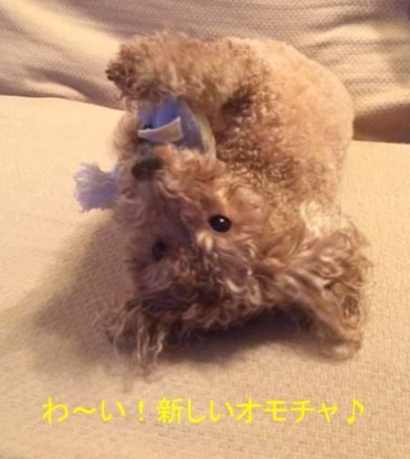 f:id:nanachan59:20170917194118j:plain