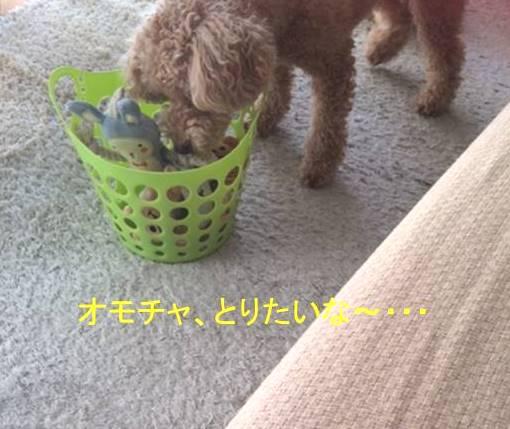 f:id:nanachan59:20170921140128j:plain