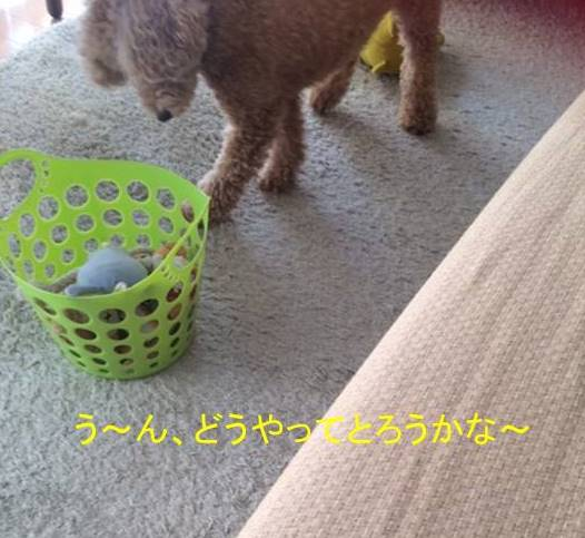 f:id:nanachan59:20170921140653j:plain
