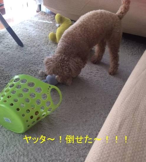 f:id:nanachan59:20170921141838j:plain