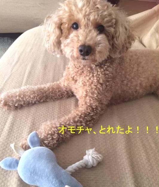 f:id:nanachan59:20170921142433j:plain