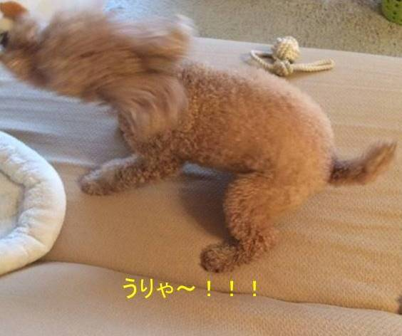 f:id:nanachan59:20170923013508j:plain