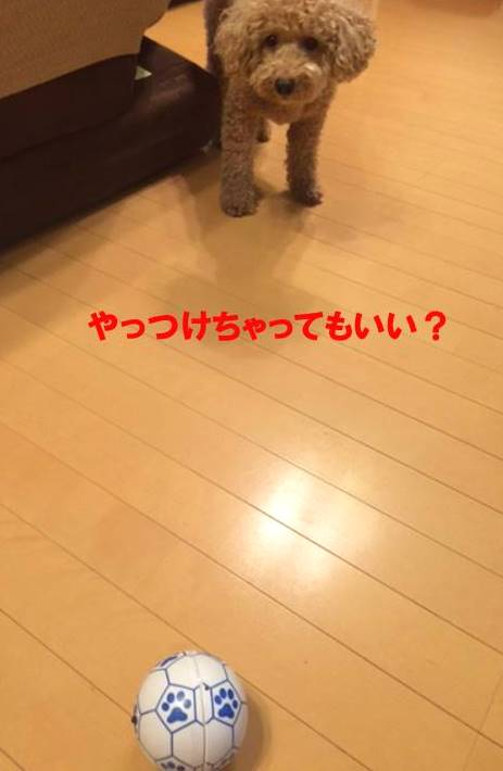 f:id:nanachan59:20170925181825j:plain