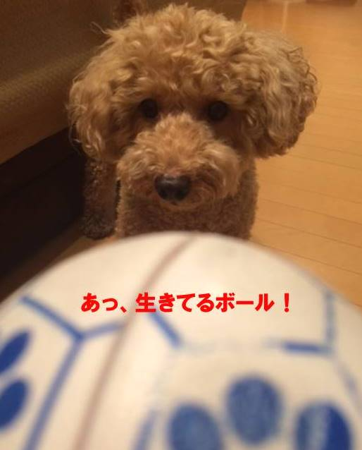 f:id:nanachan59:20170925182403j:plain