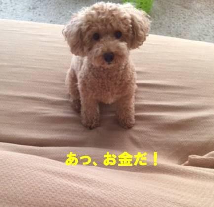 f:id:nanachan59:20170926145402j:plain