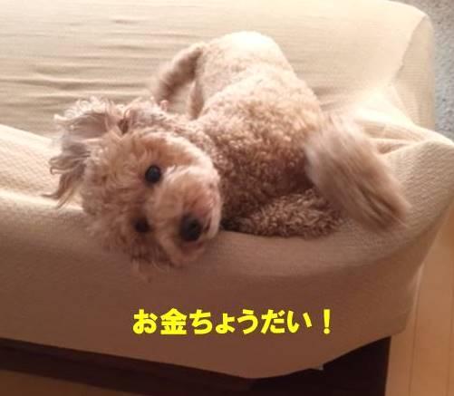 f:id:nanachan59:20170926145827j:plain