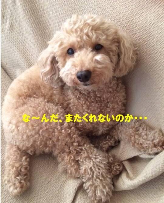 f:id:nanachan59:20170926150628j:plain