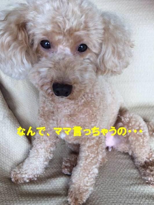 f:id:nanachan59:20170927082801j:plain