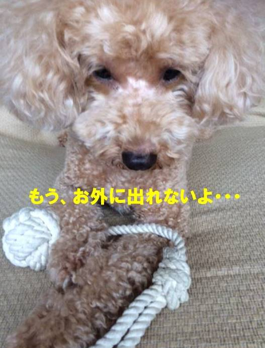 f:id:nanachan59:20170927083336j:plain