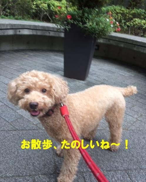 f:id:nanachan59:20170927083812j:plain