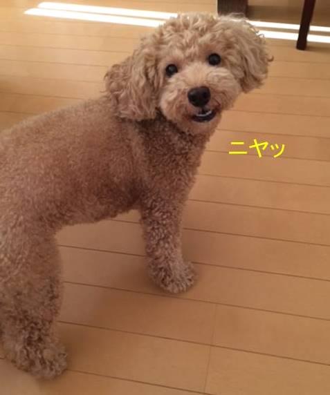 f:id:nanachan59:20170928082032j:plain