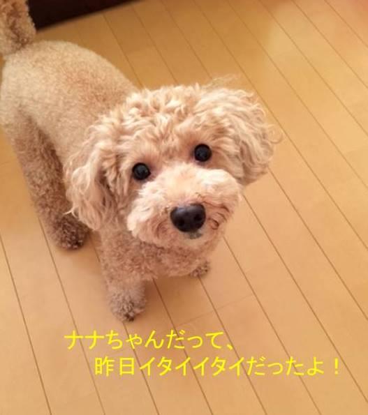 f:id:nanachan59:20170928083339j:plain