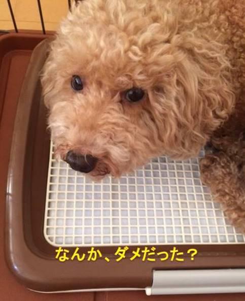 f:id:nanachan59:20170928211235j:plain