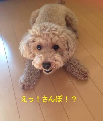 f:id:nanachan59:20170930231603j:plain