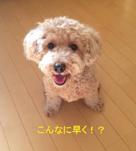 f:id:nanachan59:20170930231957j:plain