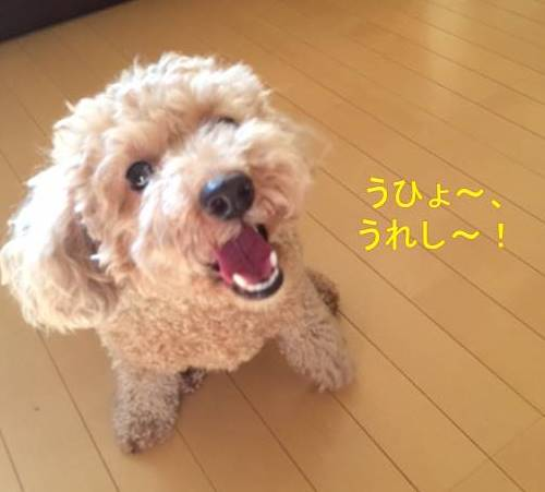 f:id:nanachan59:20170930232503j:plain