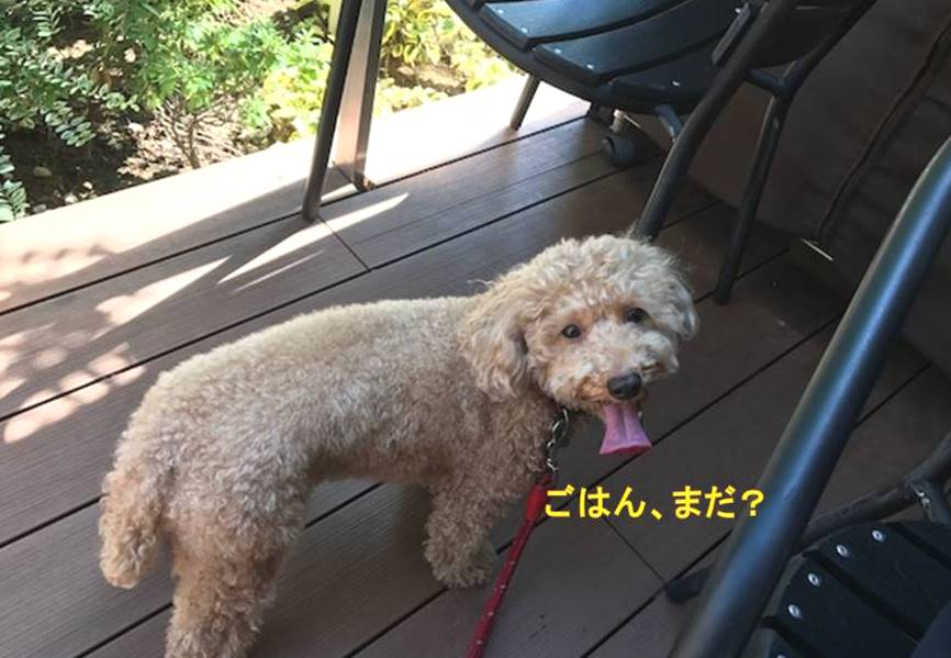 f:id:nanachan59:20171001214638j:plain