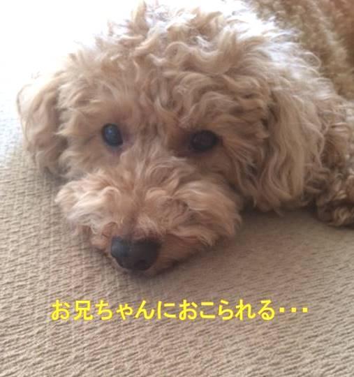 f:id:nanachan59:20171002140025j:plain