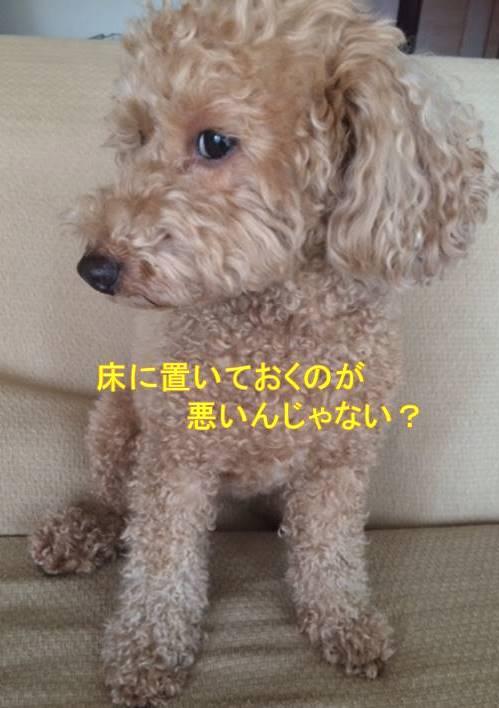 f:id:nanachan59:20171002140639j:plain