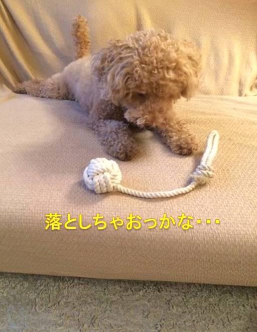 f:id:nanachan59:20171003180529j:plain