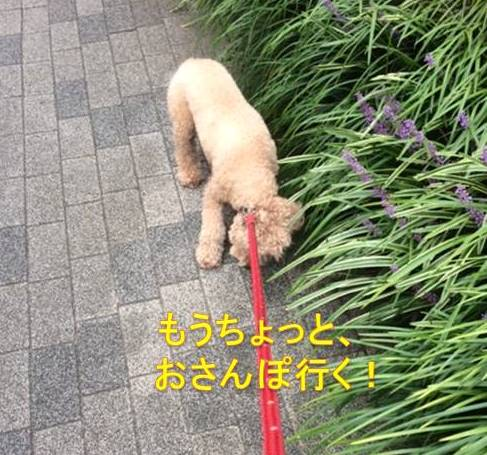 f:id:nanachan59:20171005073913j:plain