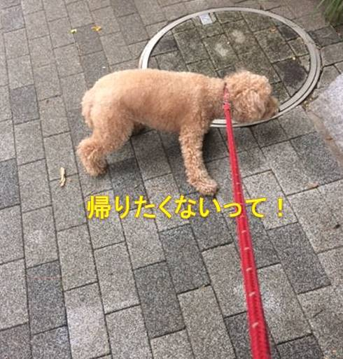 f:id:nanachan59:20171005074306j:plain