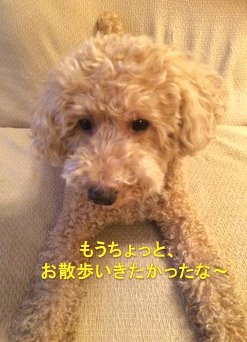f:id:nanachan59:20171005092112j:plain