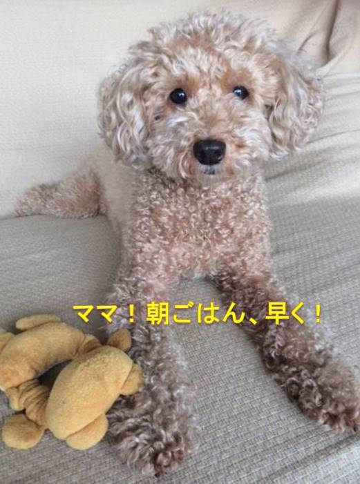 f:id:nanachan59:20171006164506j:plain