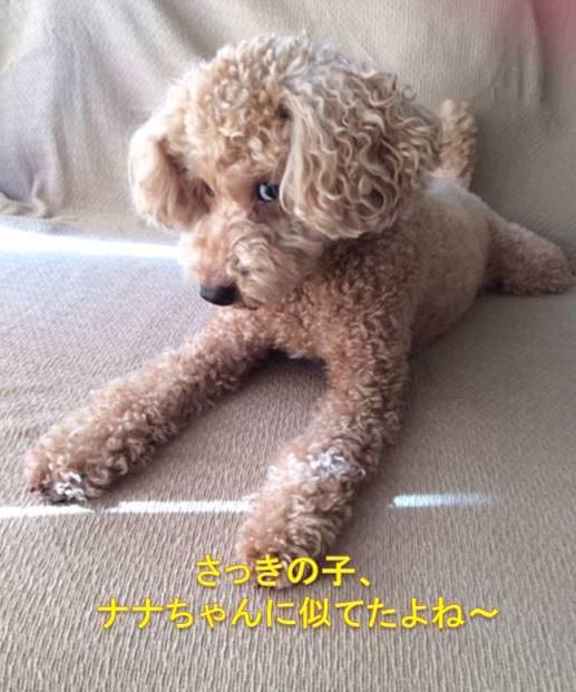 f:id:nanachan59:20171008213902j:plain