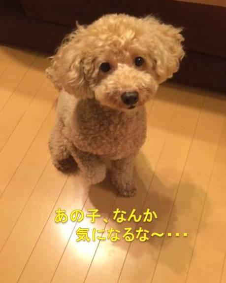 f:id:nanachan59:20171008214523j:plain