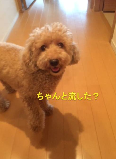 f:id:nanachan59:20171012204349j:plain