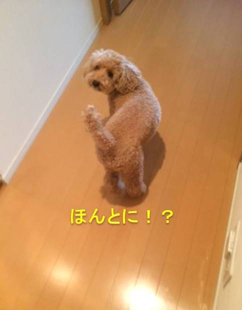 f:id:nanachan59:20171012204839j:plain