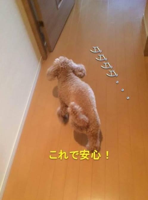 f:id:nanachan59:20171012210048j:plain