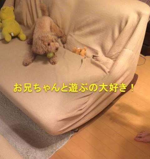 f:id:nanachan59:20171013184638j:plain