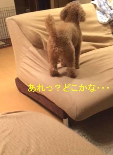 f:id:nanachan59:20171013194614j:plain