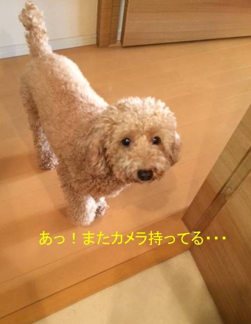 f:id:nanachan59:20171014143918j:plain