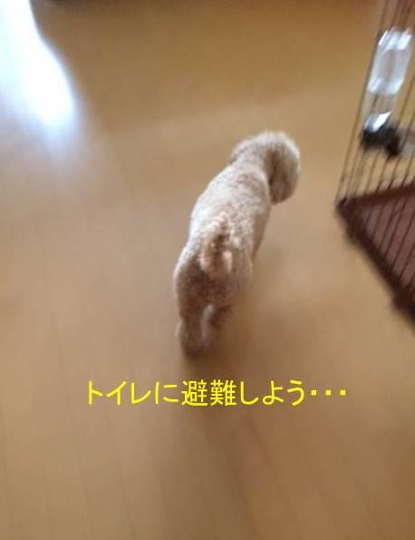 f:id:nanachan59:20171014144417j:plain